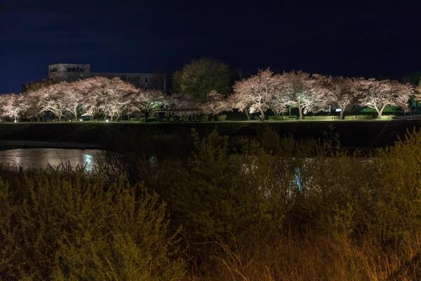 夜桜@天竜川