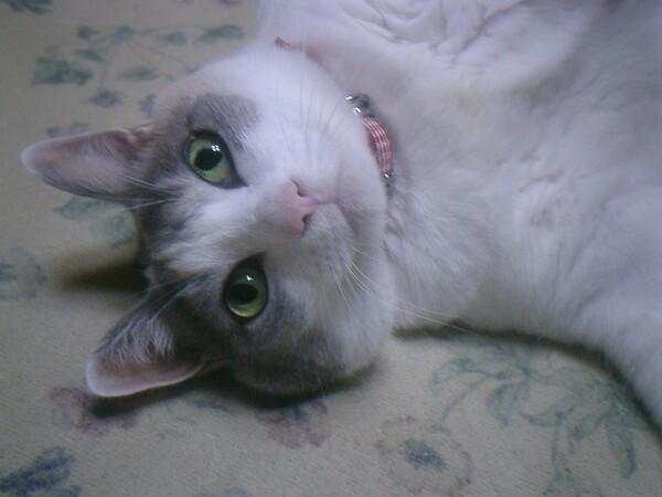 猫の目は宝石