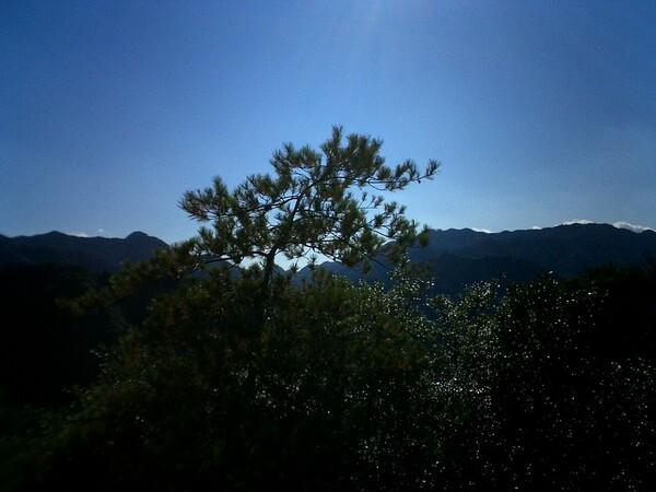 松の景色(冬)