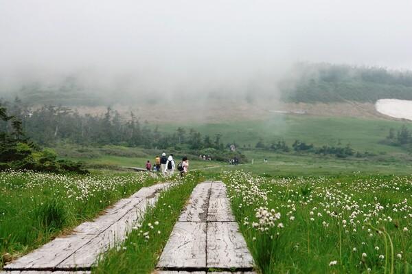 霧の中のわたすげ