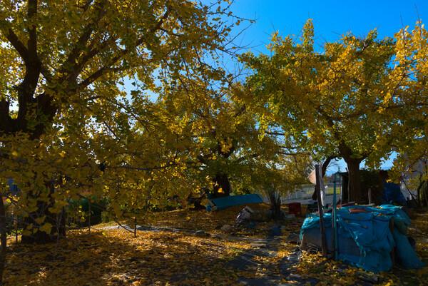 黄葉のある風景