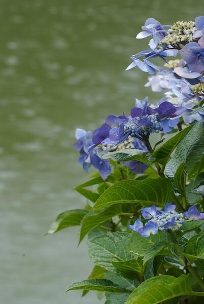 日本庭園の六月