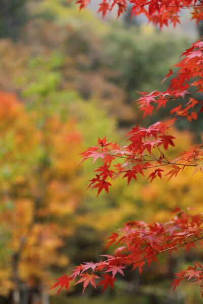 さよなら宇津江四十八滝
