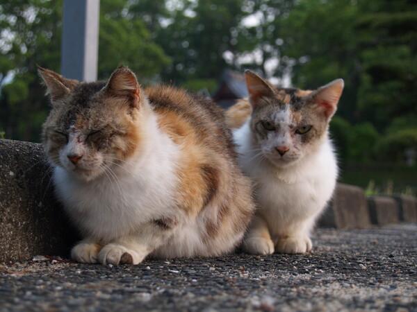 【猫】喧嘩友達