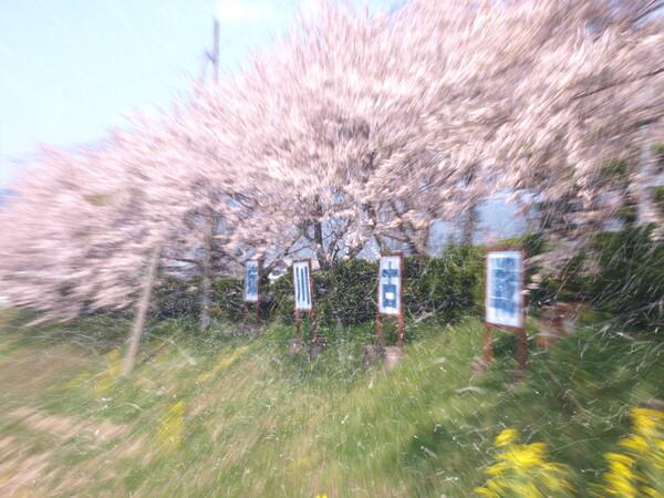 春の【風を感じて】