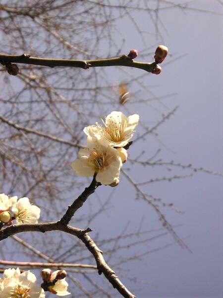 桜の前に・・・