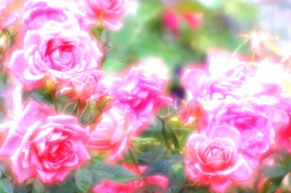 【この色 好き!】春の花#15