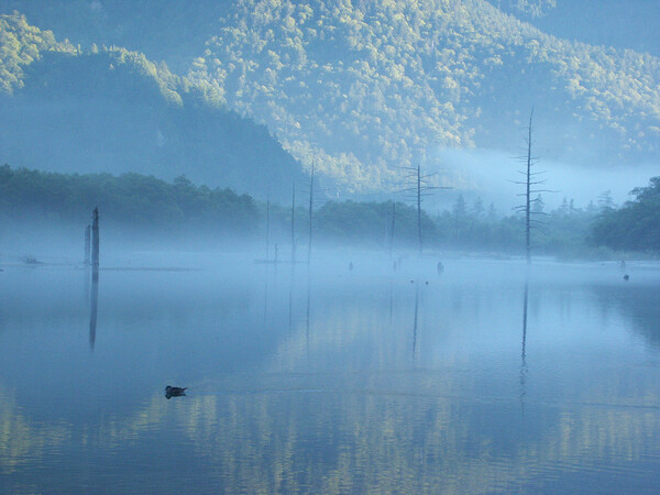【水】朝靄の大正池