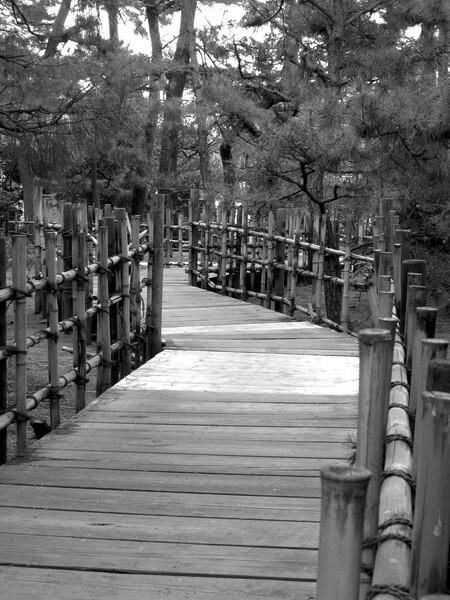 [道] 松林の渡り道
