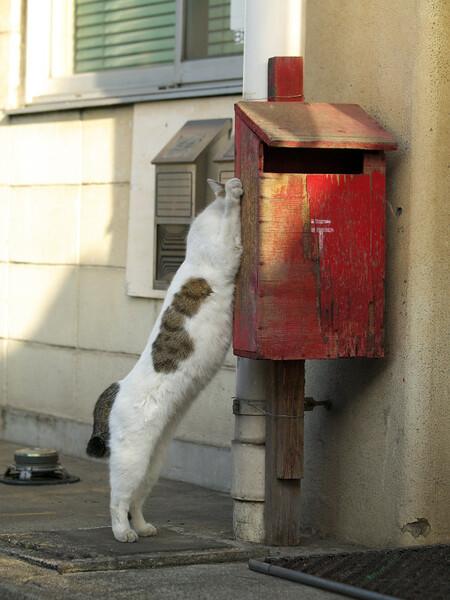 【猫】 吉報届く?