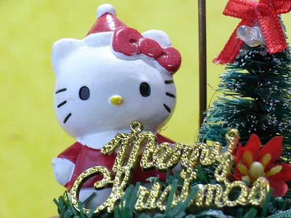 【猫】キティちゃん