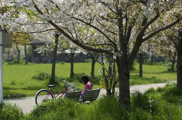 『春』緑の風を感じて・・・