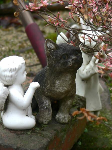 ・・・子猫と天使・・・