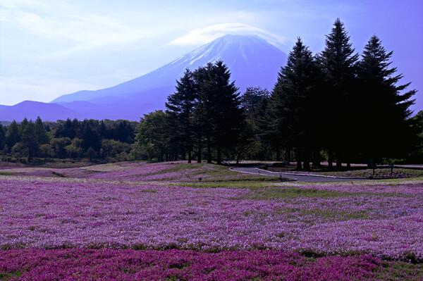 芝桜と笠雲の富士山