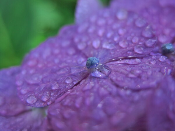 【Purple】Drop Water