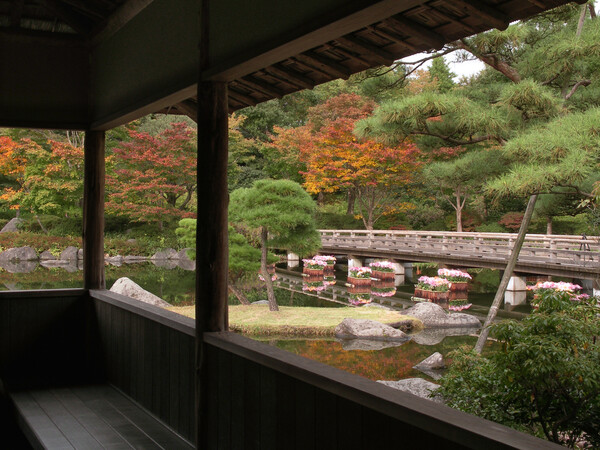 【絵のような】秋の日本庭園