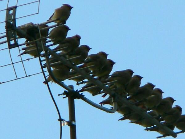 【ザ・ワールド】鳥の世界