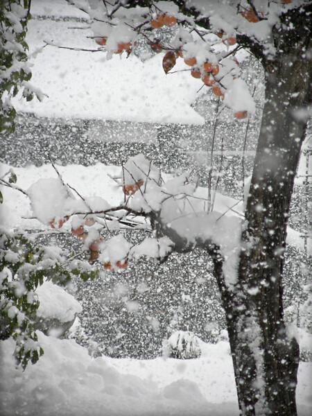 初雪にして