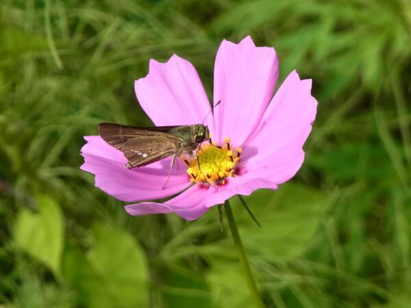 CX6で花を撮りました。