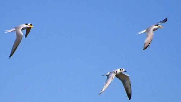 【天】青空を飛ぶ鳥 1