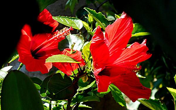 テスト赤い花 3