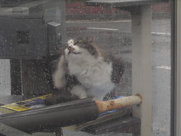 電話ボックスで雨宿り