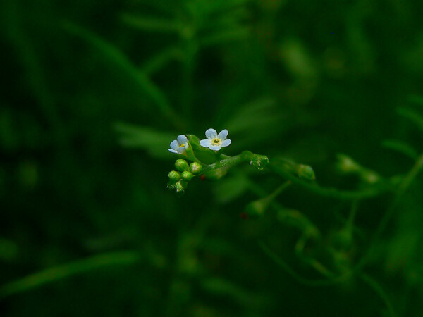 とても小さい花・・・