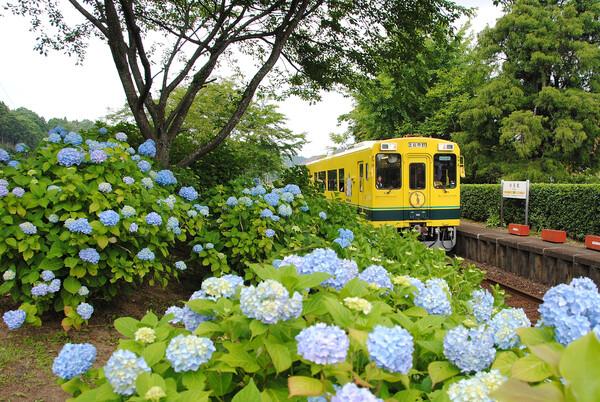 紫陽花の駅