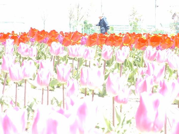 【花のある情景】ファイルNo.O-64