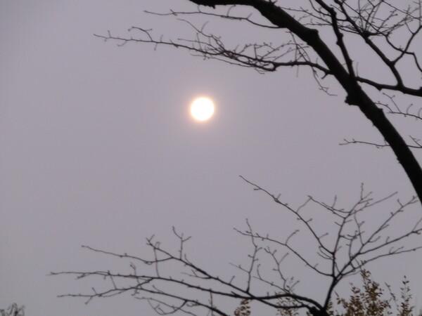有明の月(寒い冬の朝)