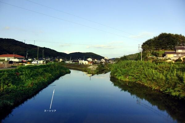 ヌートリアの居る川
