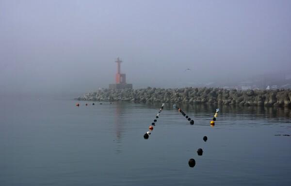 漁港の朝 1