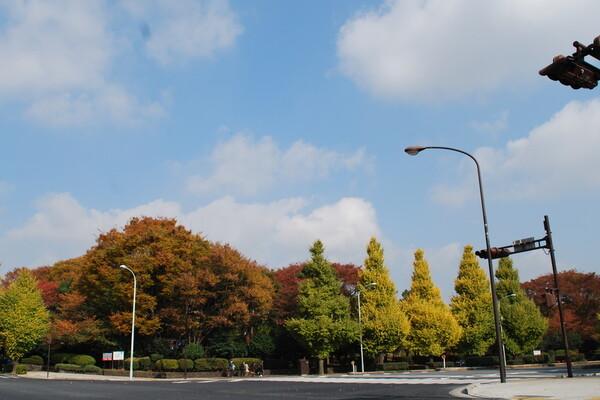 国会議事堂前の紅葉