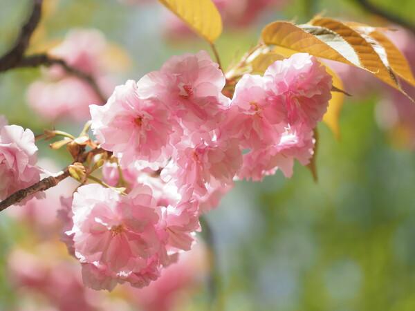 春の終わりに
