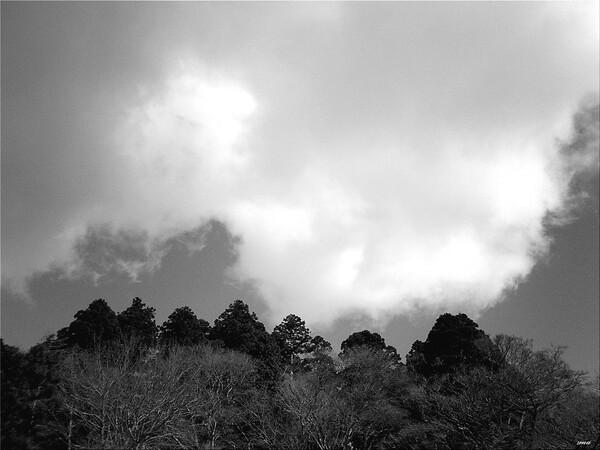 【流】雲と梢の鬩ぎ合い(せめぎあい)