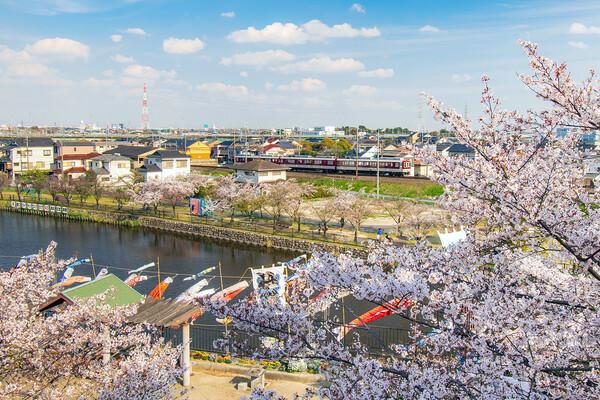 【花のある風景】愛知県海部郡蟹江町