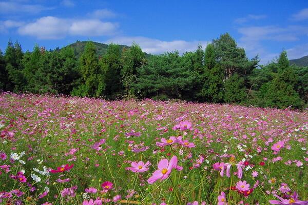 【花のある情景】遠足