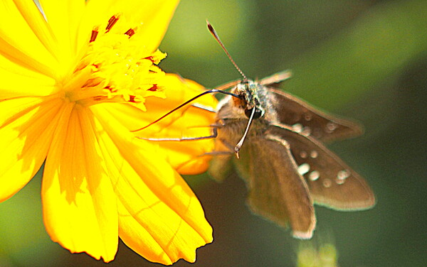小さな蝶です。