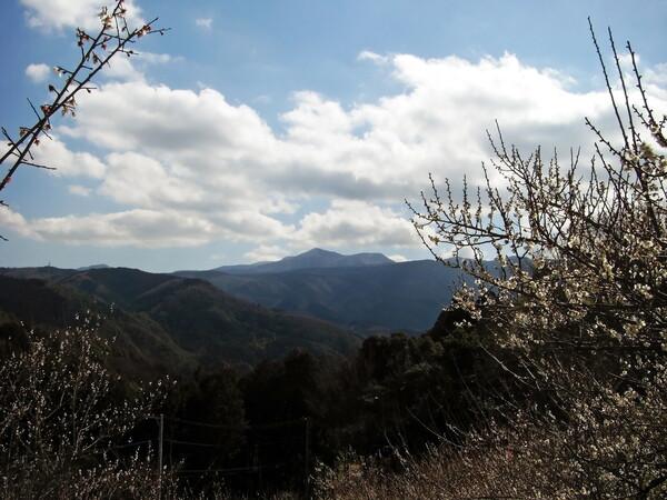【この色 好き!】白梅と冬の山