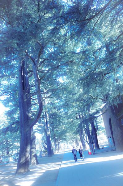 冬休みの木漏れ日