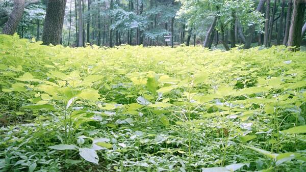 湿地に群生する植物