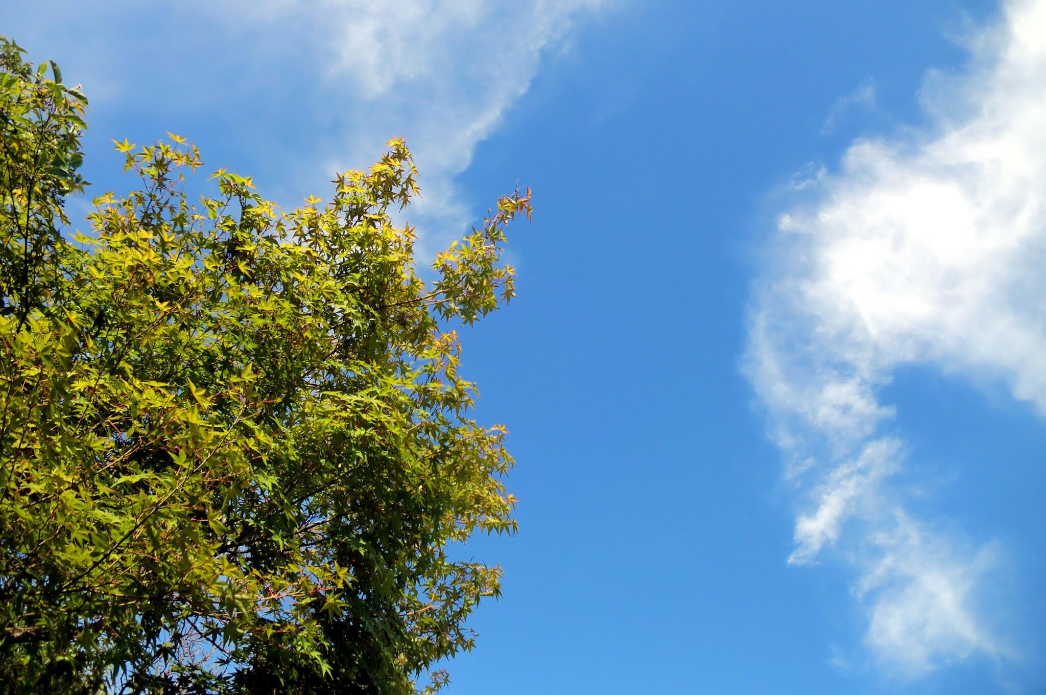 暑~い青空
