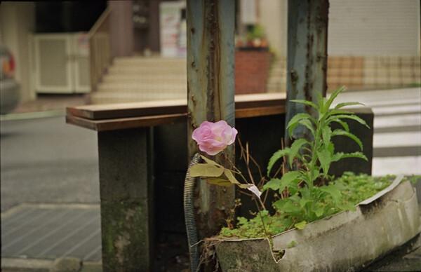 街の美化に孤軍奮闘中