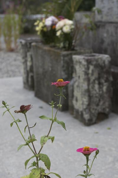 花を添える