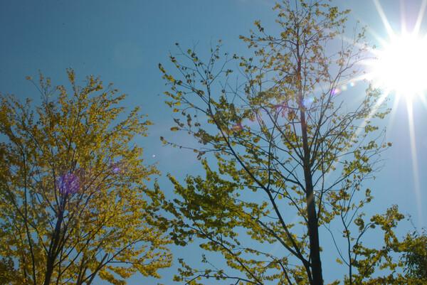 秋の陽(kickhamさんへ)