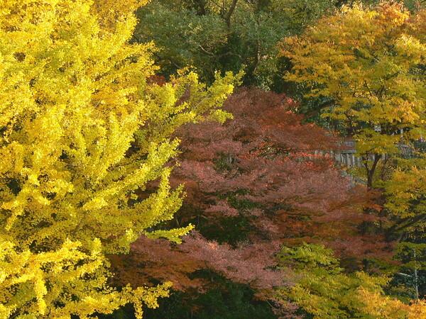【秋】神社の森