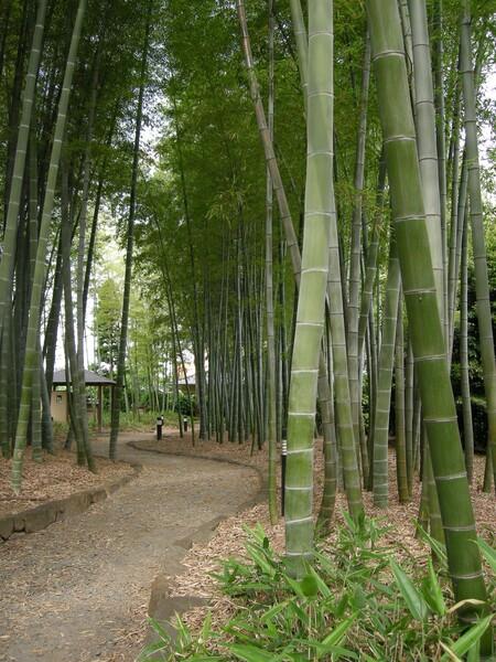 竹垣の散歩道
