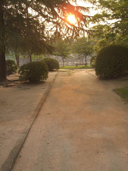 「光」夕日のこぼれる小道