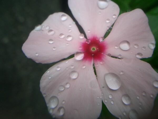 【ザ・ワールド】 花びらの上の水玉の世界