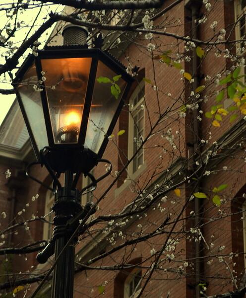 桜をランプ